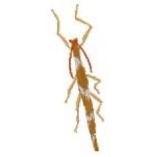 BeetlesnBugs 13