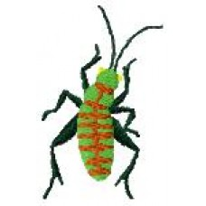 BeetlesnBugs 17