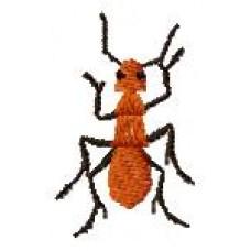 BeetlesnBugs 4