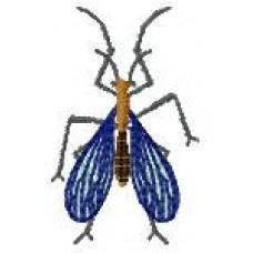 BeetlesnBugs 6