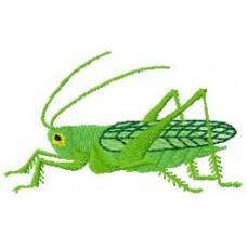 BeetlesnBugs 8