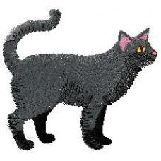 Cat m