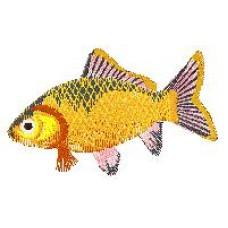 Goldfish b