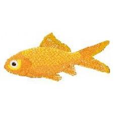 Goldfish c