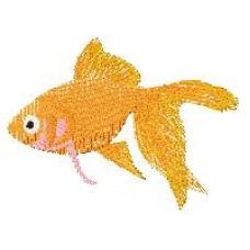 Goldfish d