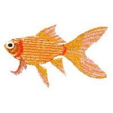 Goldfish h