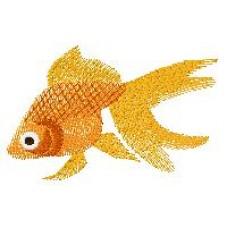 Goldfish j